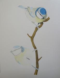 Blue tit - 5